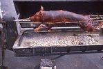 A Roasting Hog