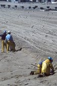 An Oil Spill Cleanup in Southern California