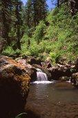 Grant Creek in the Blue Range