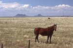 A Solitary Horse and Rabbit Ear Mountain
