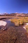 The Salmon River near its Headwaters
