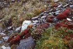 A Mossy Stream Bed in the Romanzof Mountains