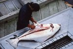 Cleaning a Halibut at Bartlett Cove
