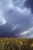 Storm Clouds over the Colorado Prairie
