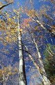 Autumn Foliage on the Deep Creek Trail
