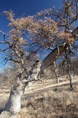 A Dry Winter in the Sierra Nevada Foothills