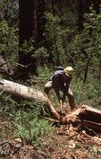 Trail Work in the Arizona Mountains
