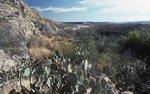 The Rio Grande above Boquillas Canyon