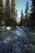 Morning Light at Fish Creek