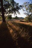 An Arizona Grassland at Sunset