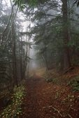 The Mount Sterling Ridge Trail in the Fog