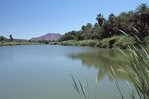 An Oasis in the Sonoran Desert