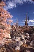 A Sonoran Desert Landscape