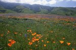 Springtime at Tejon Ranch