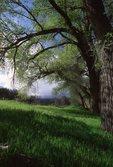 Springtime in the Verde Valley