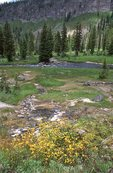 A Backcountry Hot Spring in Three Rivers Meadow