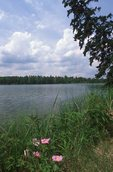 Lake Itasca (Source of the Mississippi River)