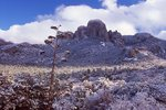 Snowfall in the Chihuahuan Desert