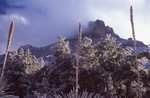 An Ice Storm in the Chisos Mountains