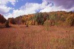 Autumn on St. Joseph Island