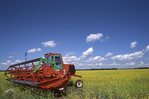 A Combine in a Canola Field