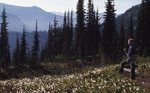 A Hiker in Avalanche Lilies on the Pacific Crest Trail