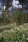 Wildflowers near the Appalachian Trail