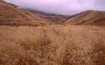 Grasslands in Scorpion Valley, Santa Cruz Island