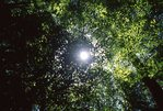 A Forest Canopy in the Southern Appalachians