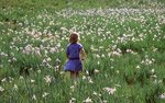 A Little Girl in an Iris-Filled Meadow