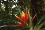 A Tropical Bromeliad