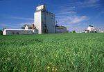 A Grain Elevator on the Manitoba Prairie