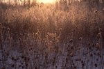 A Frosty Sunrise in Northern Illinois
