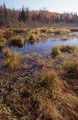 The Little Carp River Marsh