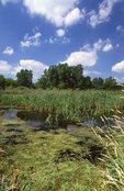 A Marsh in Northern Illinois