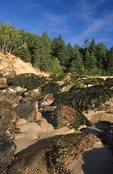 A Jumble of Boulders at Newport Cove