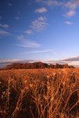 A Northern Illinois Prairie at Sunset
