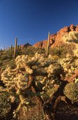 Evening in the Ajo Mountains