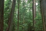 In Cathedral Grove