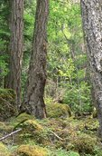 An Ancient Forest in British Columbia