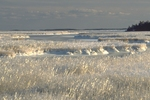 Ice-covered salt marsh and tidal creek