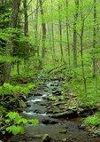 Springtime view of stream running through deciduous forest