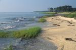 Shoreline of Chesapeake Bay with beach and saltmarsh cordgrass