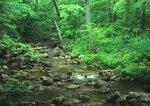 Stony Creek, a trout stream