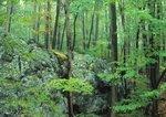 Hardwood forest and boulder