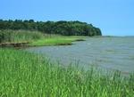 York River shoreline with saltmarsh cordgrass, Chesapeake Bay watershed