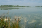 Cattails and glacial lake