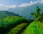 Grassy road leading to the upper Hanalei Valley and cloudy ridges of Namolokama Mountain