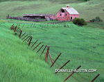 Weathered barn (dated 1915) and meandering fence in a green valley of the Zumwalt praire
