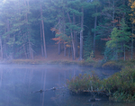 Morning fog shrouds the forested shore of Little Bass lake  Northern Hightland American Legion State Forest